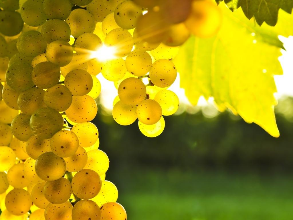 Польза и вред виноград