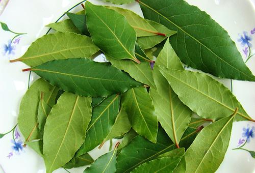 Лавровые листья
