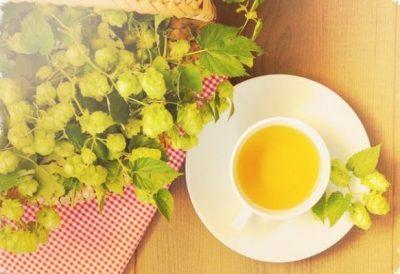 Чай из хмеля