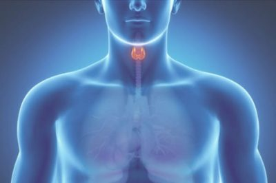 Цитовидная железа
