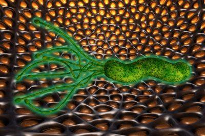 Токсины микроорганизмов