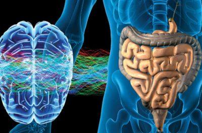 Мозг контролирует метаболизм