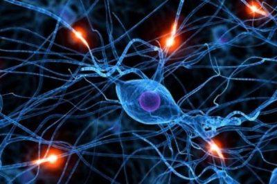 Сероводород и мозг