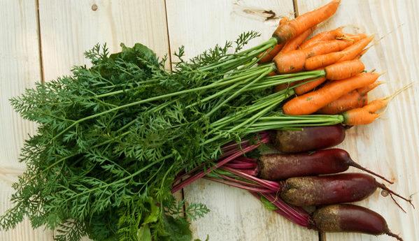 Свекла морковь шпинат