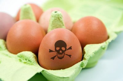 Яйца сальмонелла