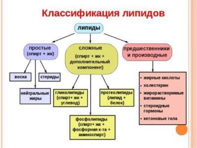 Структура липидов